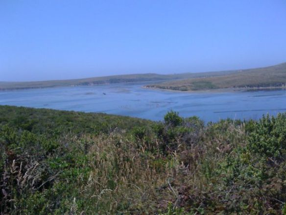 View of the estuary from the Estero Trail